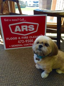ARS Flood & Fire Cleanup Disaster Dog Pets Safe